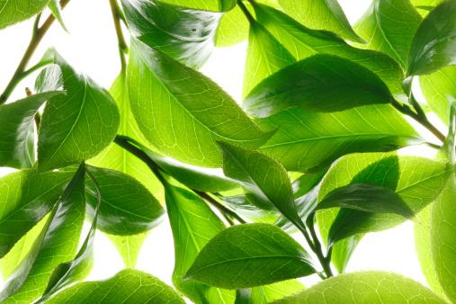 茶葉「Close-up of tea leaves」:スマホ壁紙(2)