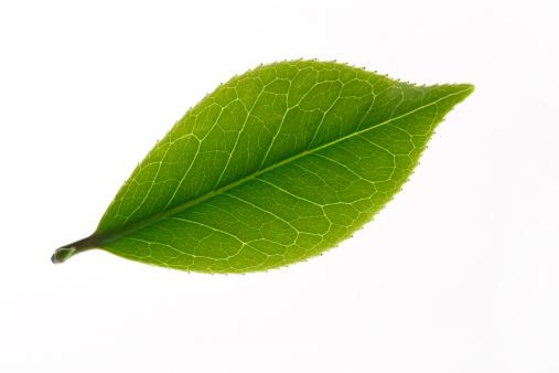 Digital Composite「Close-up of tea leaves」:スマホ壁紙(8)