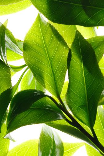 茶葉「Close-up of tea leaves」:スマホ壁紙(19)