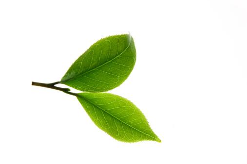 茶葉「Close-up of tea leaves」:スマホ壁紙(16)