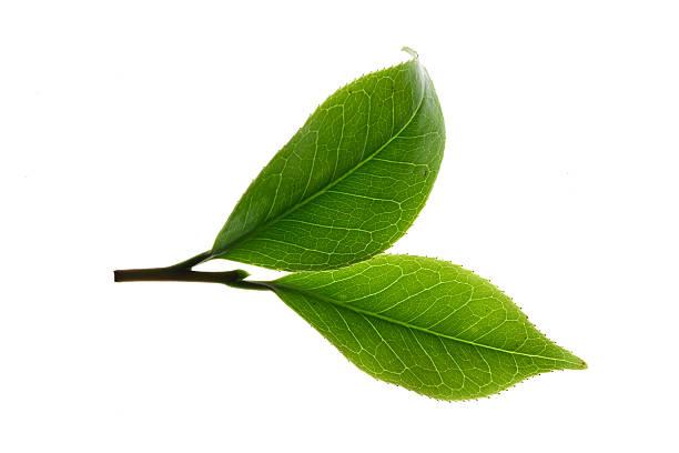 Close-up of tea leaves:スマホ壁紙(壁紙.com)