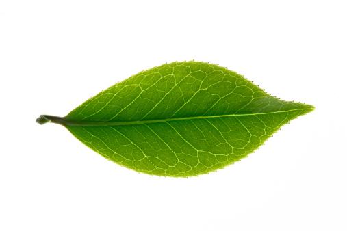 茶葉「Close-up of tea leaves」:スマホ壁紙(18)