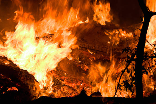 Close-up of a raging fire destroying trees:スマホ壁紙(壁紙.com)