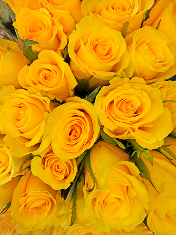 Flower Shop「Close-up of an arrangement of blossoming yellow colored roses and spiral patterns.」:スマホ壁紙(14)