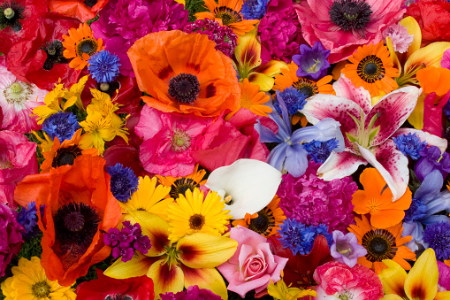 ブーケ「Close-up of colorful poppies (Papaver somniferum) and other flowers, Sammamish, Washington State, USA」:スマホ壁紙(12)