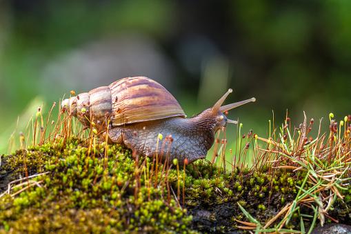 カタツムリ「Close-up of a snail on ground, Indonesia」:スマホ壁紙(2)