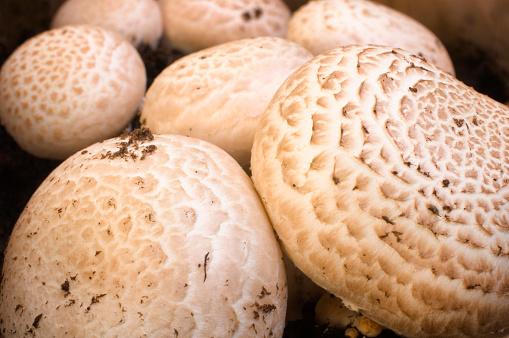 Portobello Mushroom「A Close-up of Portobello mushroom」:スマホ壁紙(6)