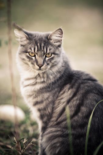 Mixed-Breed Cat「Close-up of cute cat」:スマホ壁紙(17)