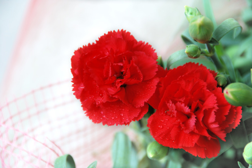 カーネーション「Close-up of carnations」:スマホ壁紙(0)