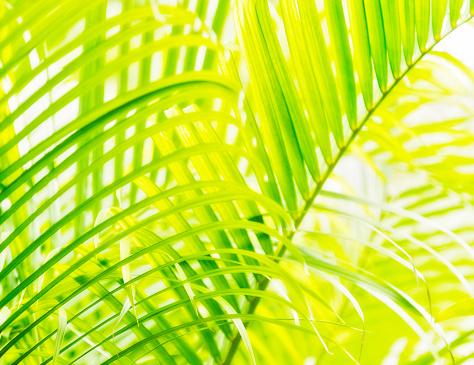 Rhythm「Close-up of palm leaf on white background」:スマホ壁紙(13)