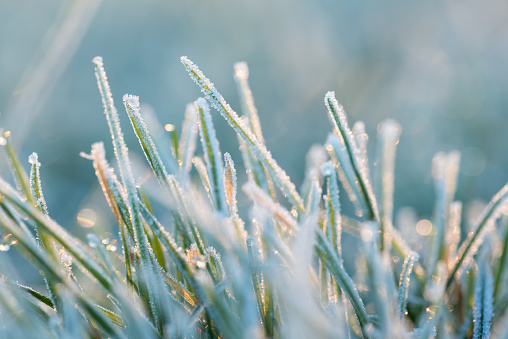 Frozen「Close-up of rime ice on grass in the morning」:スマホ壁紙(6)