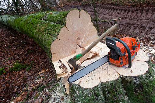 Blade「Close-up of a cut down tree with a saw and ax on the trunk」:スマホ壁紙(18)