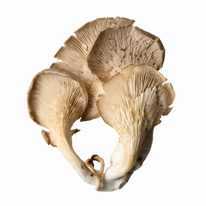 ヒラタケ「Close-up of an oyster mushroom」:スマホ壁紙(11)