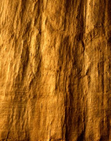 Bark Paper「Close-Up of Bark Paper」:スマホ壁紙(15)