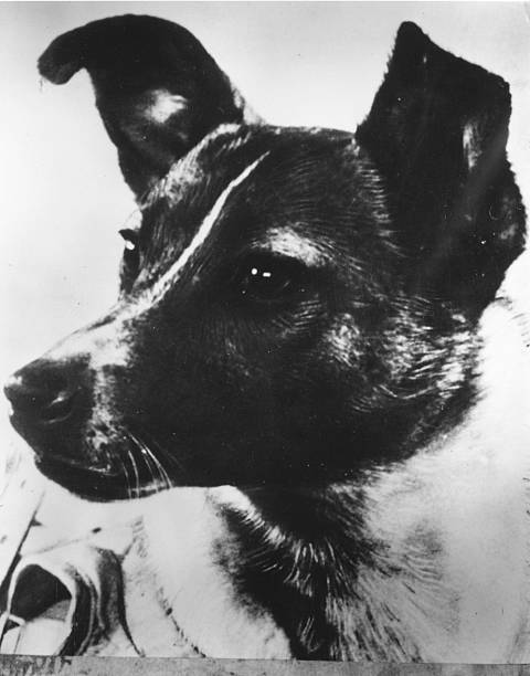 Sputnik Dog:ニュース(壁紙.com)