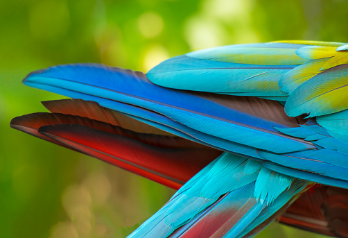 Rainbow「Close-up of Scarlet Macaw feathers.」:スマホ壁紙(13)