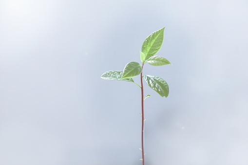 野菜・フルーツ「Close-up of an avocado seedling plant」:スマホ壁紙(18)