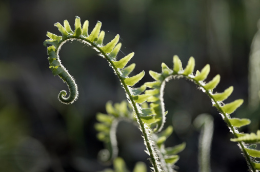 Frond「Close-up of ferns」:スマホ壁紙(5)