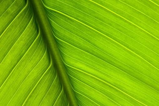 Hawaiian Culture「Close-up of green plant leaf and stem」:スマホ壁紙(1)