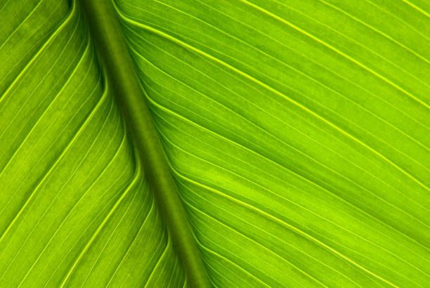 Close-up of green plant leaf and stem:スマホ壁紙(壁紙.com)