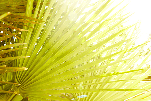 Resort「Close-up of tropical palm leaf in sun」:スマホ壁紙(9)
