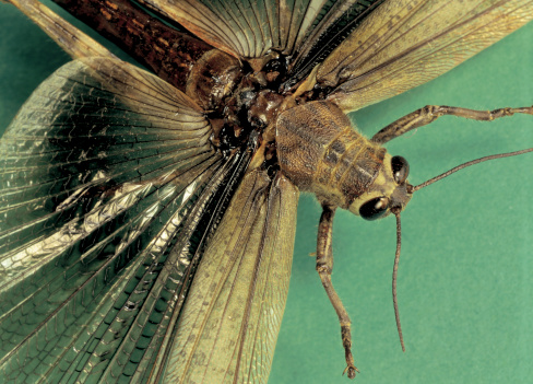 Ugliness「Close-up of a flying insect」:スマホ壁紙(10)