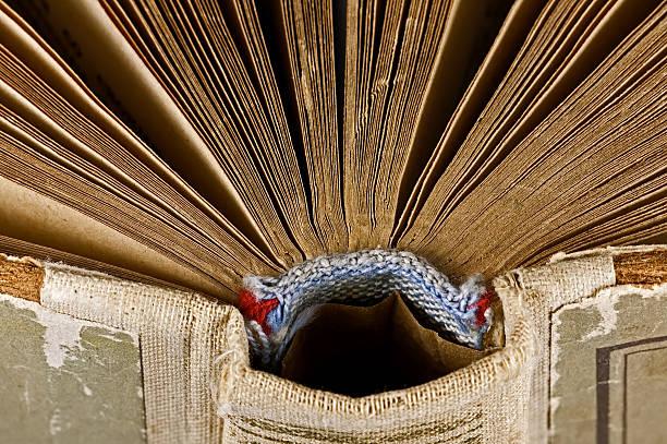Close-up of open book:スマホ壁紙(壁紙.com)