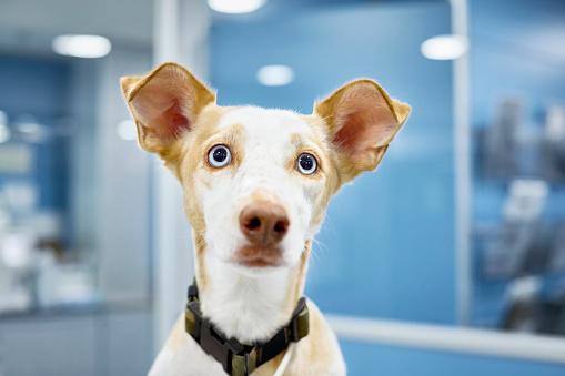 Healing「Close-up of cute dog at veterinary clinic」:スマホ壁紙(17)