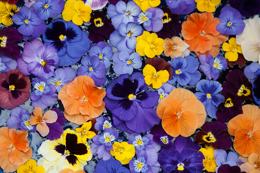 ブーケ「Close-up of Pansies (Viola tricolor), Sammamish, Washington State, USA」:スマホ壁紙(13)