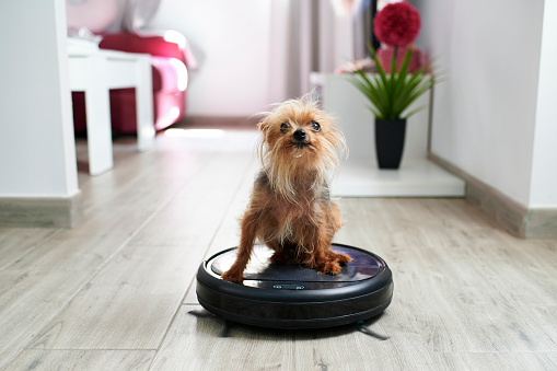 Domestic Animals「Close-up of Yorkshire terrier on robotic vacuum cleaner at home」:スマホ壁紙(11)