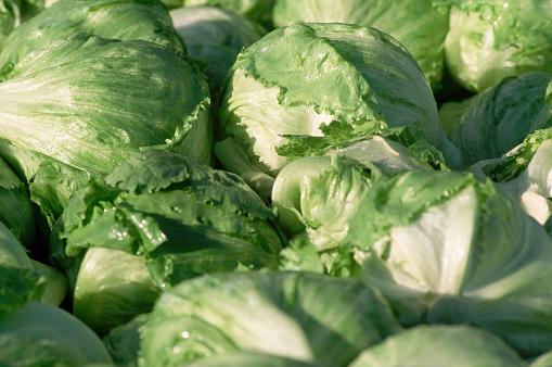 1980-1989「Closeup of Harvested Iceberg Lettuce Heads」:スマホ壁紙(19)