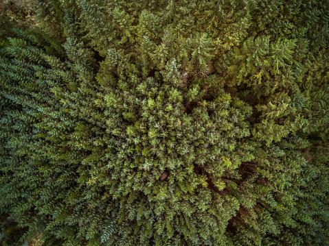 County Cork「Close-up of forest, Gougane Barra National Forest Park, County Cork, Ireland」:スマホ壁紙(12)