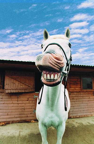 Close-up of Horse with Mouth Open:スマホ壁紙(壁紙.com)