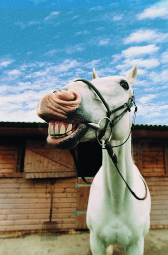 Horse「Close-up of Horse with Mouth Open」:スマホ壁紙(5)