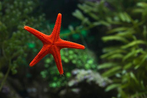 Starfish「Close-up of a starfish, Indonesia」:スマホ壁紙(15)