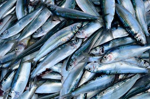 コンゴ民主共和国「Close-up of fish at a market」:スマホ壁紙(12)