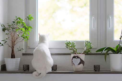 動物の世界「Back view of white cat sitting on window sill」:スマホ壁紙(12)