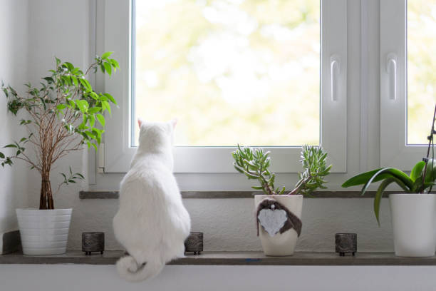 Back view of white cat sitting on window sill:スマホ壁紙(壁紙.com)