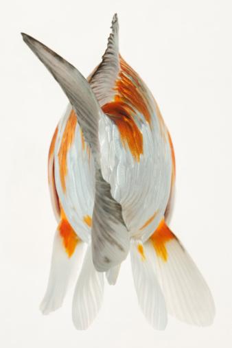 Carp「Back view of fish tail」:スマホ壁紙(4)