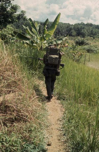 Tropical Rainforest「Jungle Radio」:写真・画像(5)[壁紙.com]