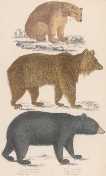 Brown Bear「Three Bears」:写真・画像(6)[壁紙.com]