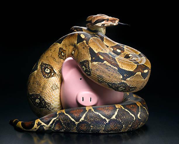 Boa constrictor squeezing piggybank:スマホ壁紙(壁紙.com)