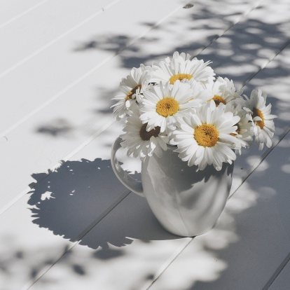 Shadow「Jug of giant daisy flowers on wooden table in sunlight」:スマホ壁紙(16)