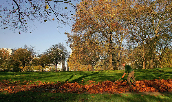 葉・植物「Autumn Colour Brightens Up London」:写真・画像(12)[壁紙.com]