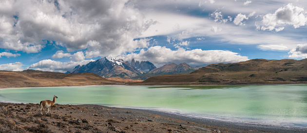Guanaco「Torres Del Paine Panorama, Patagonia, Chile」:スマホ壁紙(5)
