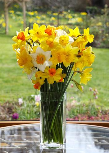 水仙「Fresh daffodils in vase and English spring garden.」:スマホ壁紙(4)