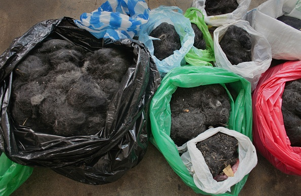 Stuffed「Human Hair Used to Mop Up Oil Spill」:写真・画像(14)[壁紙.com]