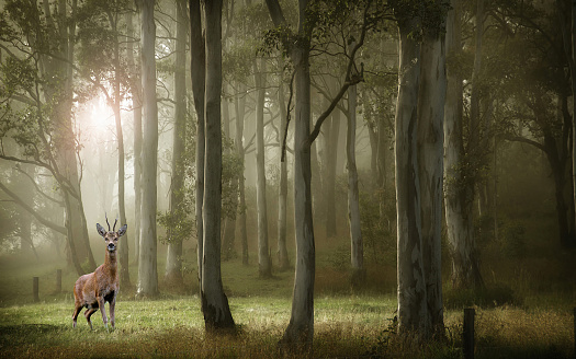 Animal Themes「Deer standing in forest, Paris, France」:スマホ壁紙(12)