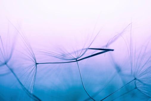 Extreme Close-Up「Dandelion seed」:スマホ壁紙(19)