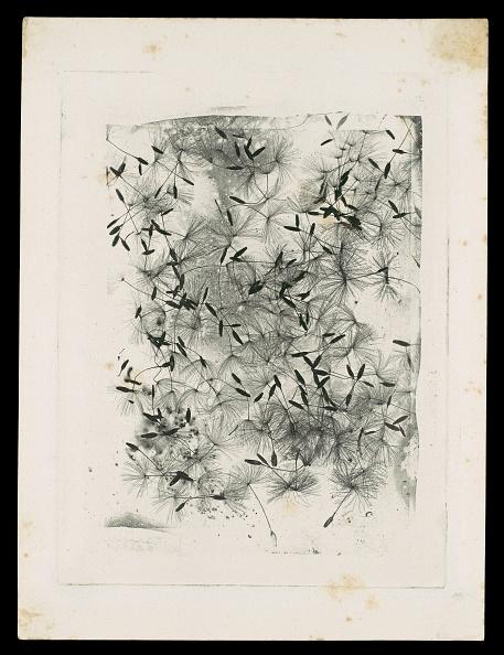 Specimen Holder「Dandelion Seeds」:写真・画像(2)[壁紙.com]
